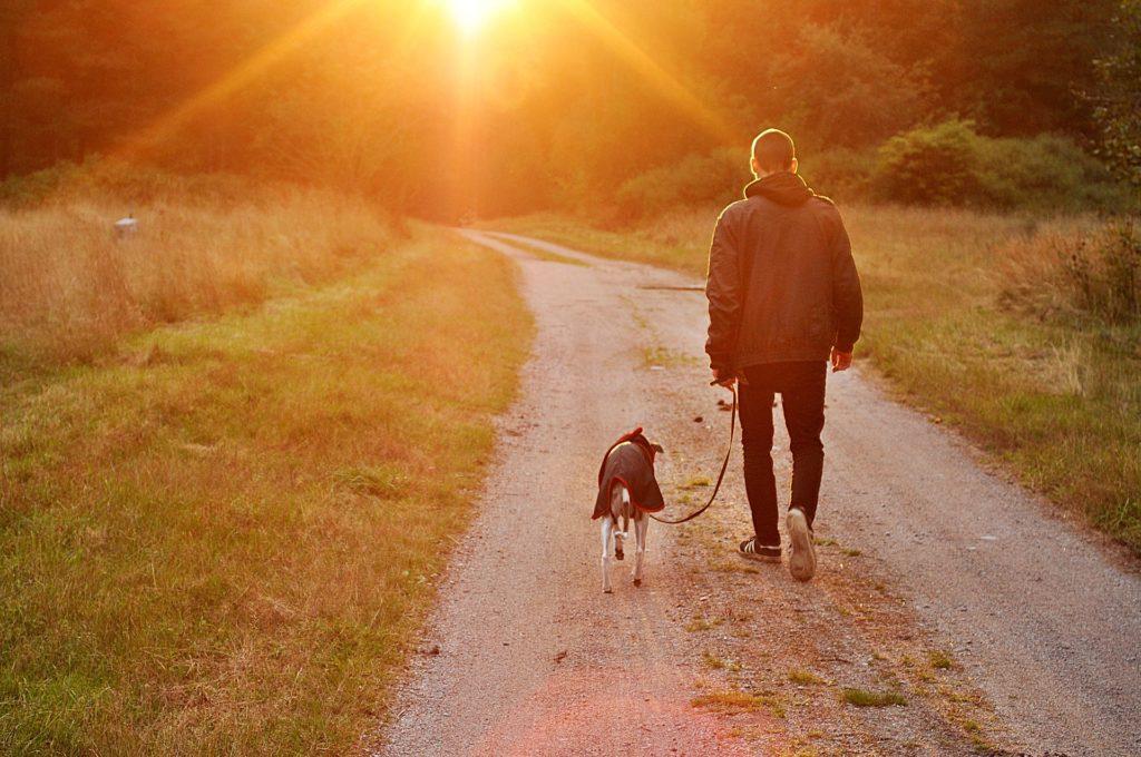 Как пересечь границу с собакой или кошкой